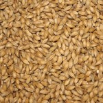 A general picture of malt
